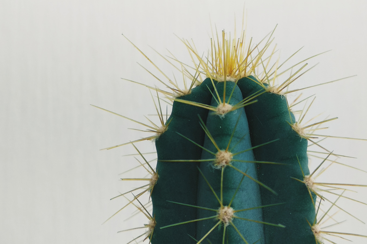 close up of cactus on gray background